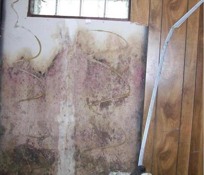 Avon Park Water and Mold Loss
